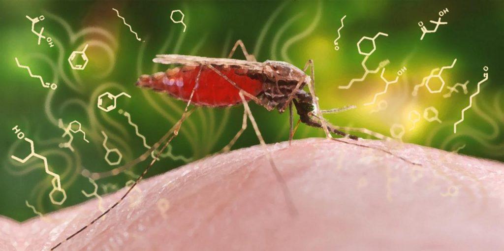 perch-la-malaria-si-sta-diffondendo-in-venezuela_5fa3f2d745ed9